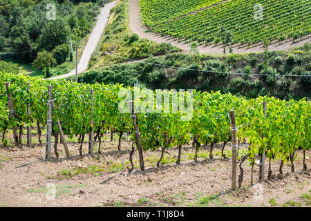 Val D'Orcia countryside in Tuscany, Italy with rolling green hills and farm landscape winery vineyard grape vine rows in idyllic picturesque village