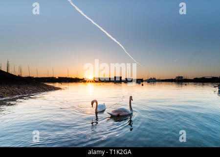Penzance, Cornwall, UK. 27th Mar, 2019. UK Weather. Feeling cooler than yesterday, but still a glorious sunrise at Penzance harbour, with these inquisitive swans coming to meet the photographer at the waters edge. Credit: Simon Maycock/Alamy Live News - Stock Photo