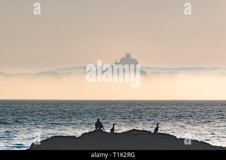 Penzance, Cornwall, UK. 27th Mar, 2019. UK Weather. Shortly after sunrise sea mist formed on the surface of the sea at Mounts Bay, shrouding the base of St Michaels mount. In the foreground cormorants warming themselves in the early morning sunshine Credit: Simon Maycock/Alamy Live News - Stock Photo