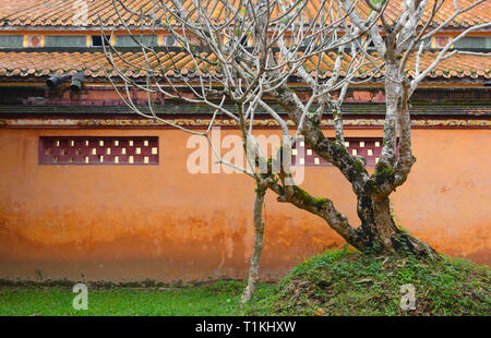 A deciduous tree within the Hung To Mieu Temple Complex in the Imperial City, Hue, Vietnam - Stock Photo