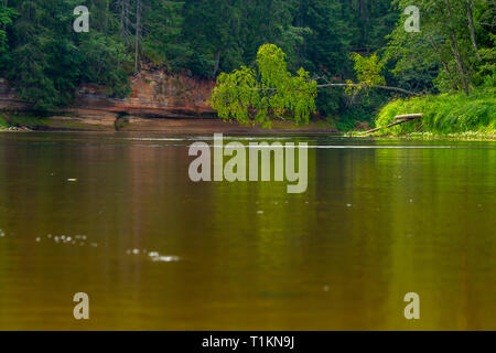 Landscape with cliff near the river Gauja and forest in the background. Broken birch tree over the river. The Gauja is the longest river in Latvia, wh - Stock Photo