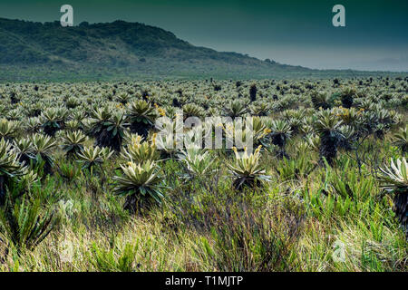 High mountain paramo in Purace National Natural Park, Cauca, Colombia - Stock Photo