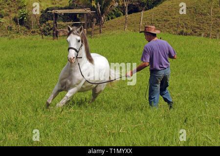 Man drills a Criollo horse, Stud farm, Guanacaste, Costa Rica - Stock Photo