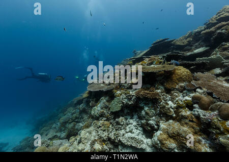 Closeup of reef with flat table coral, acropora hyacinthus - Stock Photo