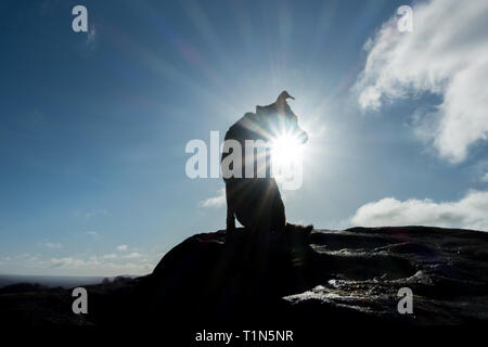 Cute photo of a dog with the sun shining out from under its chin - Stock Photo