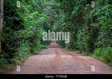 A dirt road crossing through thick jungle in southeast asia - Stock Photo