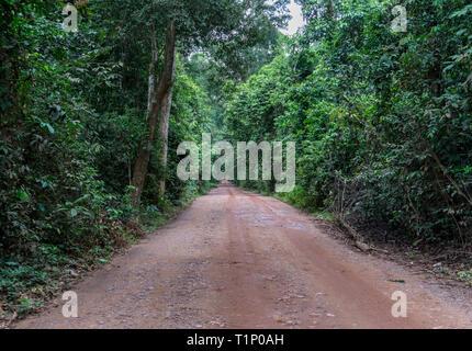 A unpaved road crossing through lush, green rainforest vegetation - Stock Photo
