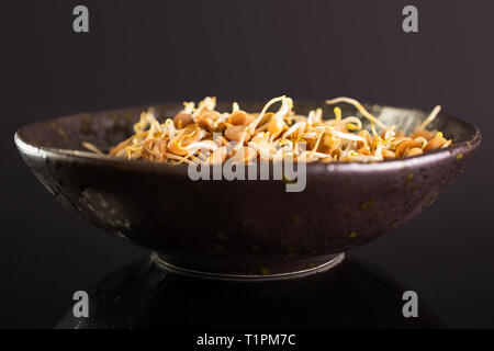 Lot of whole raw fresh yellow lentil sprouts in a grey ceramic bowl isolated on black glass - Stock Photo