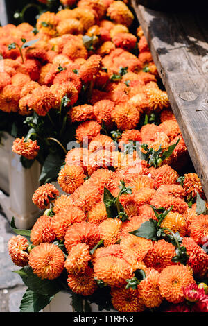 Mum flowers for sale at a market in Copenhagen, Denmark - Stock Photo