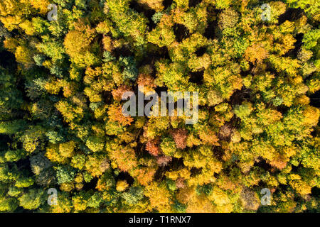 Top down view of a forest in autumn colors - Stock Photo