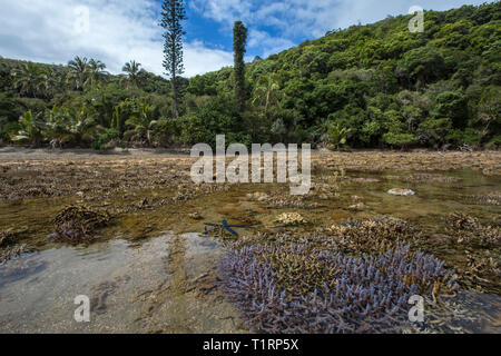 Coral at low tide in the Canal Woodin, Southern Lagoon Unesco World Heritage Site, New Caledonia. - Stock Photo