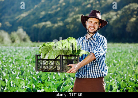 A young man in a hat holding box with ripe crop of cabbage. Happy farmer harvesting on his field. - Stock Photo