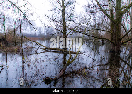 The nature reserve Bislicher Insel, near Xanten on the Lower Rhine, Germany - Stock Photo