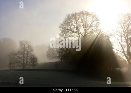 A misty morning in. Glebe park,Bowness on Windermere,Lake District,Cumbria,England,UK - Stock Photo