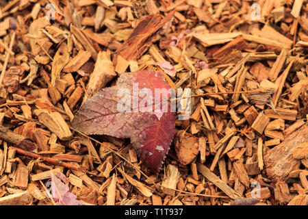 Fallen leaf on the ground in Hong Kong Country Park - Stock Photo