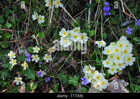 Yellow and purple wildflowers. Beautiful wild flowers in a meadow. - Stock Photo