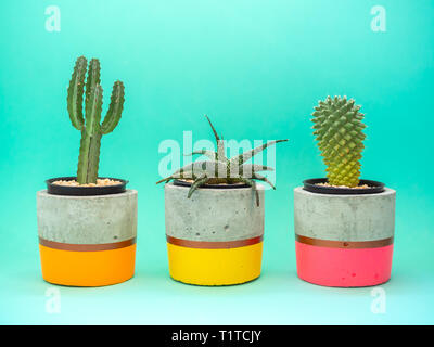 Colorful modern concrete planters with cactus plants on wooden table on green background. Painted concrete pots for home decoration minimalist style. - Stock Photo