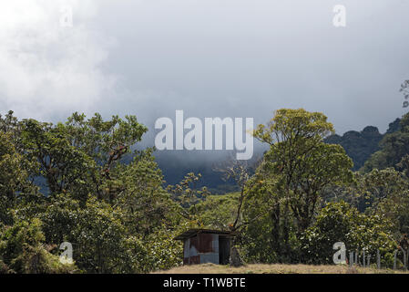Rain or cloud forest in the Volcan Baru Panama National Park - Stock Photo