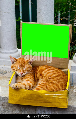 Image ginger cat sitting in box on street. - Stock Photo