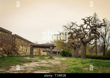 Low perspective view of showcase of ancient, rusty cannons on Kalemegdan fortress in Belgrade and scenic, curvy trees - Stock Photo