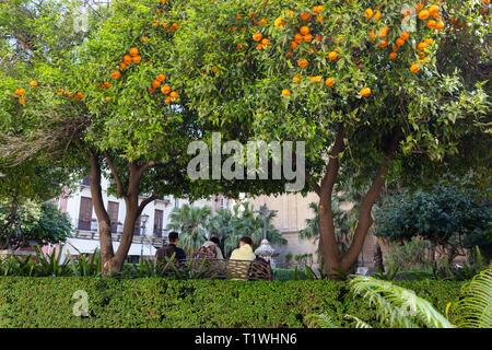 Orange trees Spain - - oranges growing on orange trees in Malaga city centre, Malaga Andalusia Spain - Stock Photo