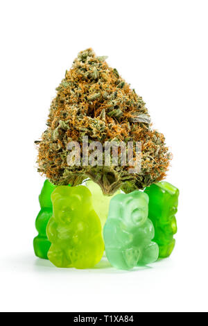 Gummy bears holding a marijuana bud isolated on a white background as an edible concept - Stock Photo