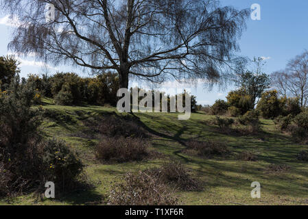 new Forest Lyndhurst on sunny day showing dales and forest scene - Stock Photo