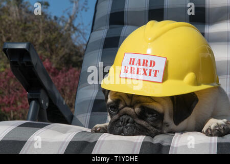 Mousehole, Cornwall, UK. 29th Mar, 2019. Brexit. Brext day comes and goes, and Brexit boredom sets in in Cornwall, as Titan the pug has just had enough. Credit: Simon Maycock/Alamy Live News - Stock Photo