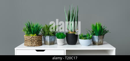 Different house plants in pots on white table at grey background. Home gardening concept