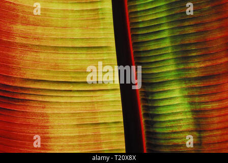 This stunning fabric creates an image that would certainly make an eye popping backdrop or background for almost any media presentation. - Stock Photo