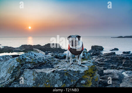 Mousehole, Cornwall, UK. 30th Mar, 2019. UK Weather. Early morning mist soon lifted at sunrise, with the promise of another fine day ahead for south west Cornwall. Titan the pug out on the rocky beach for his morning walk. Credit: Simon Maycock/Alamy Live News - Stock Photo