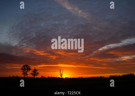 once in a life time sunset in Australia with sillhouettes of trees, Cobram, Victoria - Stock Photo