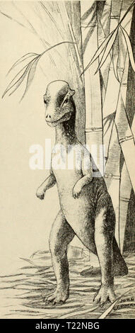 Archive image from page 94 of The dinosaur book  the