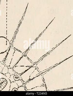 Archive image from page 132 of Die Zelle und die Gewebe Die Zelle und die Gewebe. Grundzüge der Allgemeinen Anatomie und Physiologie  diezelleunddiege02hert Year: 1893-1898  ev