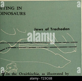 Archive image from page 92 of The dinosaur book  the - Stock Photo