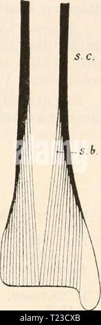 Archive image from page 122 of Die Zelle und die Gewebe - Stock Photo