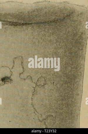 Archive image from page 372 of Die vergleichende Pathologie der Haut - Stock Photo