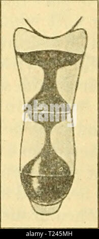 Archive image from page 249 of Diptera Brachycera (1920) - Stock Photo