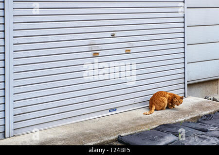 Stray, feral, orange tabby cat sits in front of a garage door shutter on concrete on sunny day. - Stock Photo