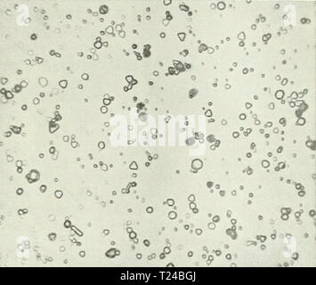 Archive image from page 580 of Discovery - Stock Photo
