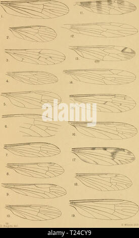 Archive image from page 650 of Diptera Nematocera (excluding Chironomidæ and - Stock Photo