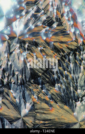 This is ascorbic acid (vitamin C) crystallized on a microscope glass plate - Stock Photo