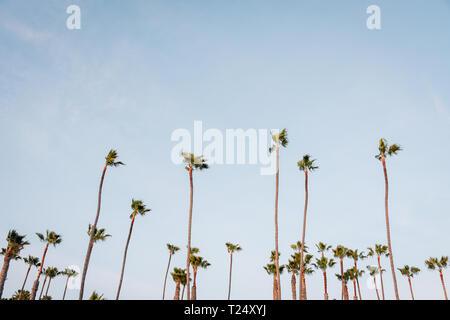 Palm trees in San Clemente, Orange County, California - Stock Photo