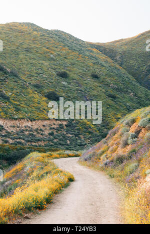 Poppies along the Walker Canyon Trail with view of hills and mountains in Lake Elsinore, California - Stock Photo