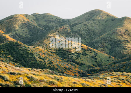 Poppies and green hills at Walker Canyon, in Lake Elsinore, California - Stock Photo