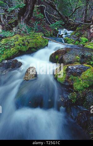 Stream at Tierra del Fuego National Park, Tierra del Fuego, Argentina - Stock Photo