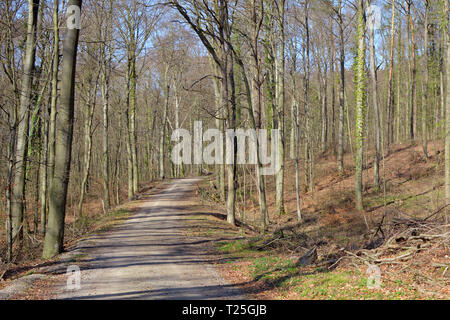 Forest called 'Odenwald'in Heidelberg in Germany on a sunny early spring day with bare trees and dried leaves on ground left over from autumn - Stock Photo
