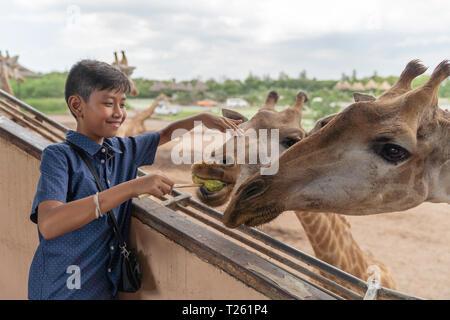 Asian cute boy feeding banana for giraffe in animal farm background. - Stock Photo
