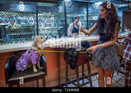 London, UK. 30th March, 2019. London Fashion Dog Walk Brunch at M Restaurant in Victoria. Credit: Guy Corbishley/Alamy Live News - Stock Photo