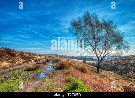 Barbrook, Derbyshire, UK. 30th March, 2019. UK Weather: Bright blue sky on a warm sunny day in the Barbrook Valley, Peak District. HDR landscape photography. Credit: Doug Blane/Alamy Live News - Stock Photo